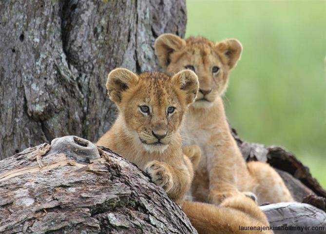Waiting for Mom - Serengeti